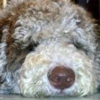 Winston - josee bedard